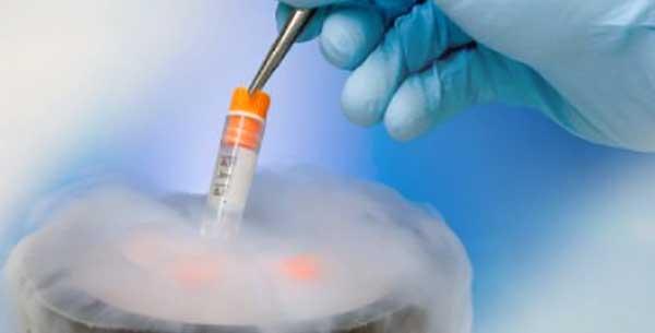 подготовка к криопереносу эмбрионов