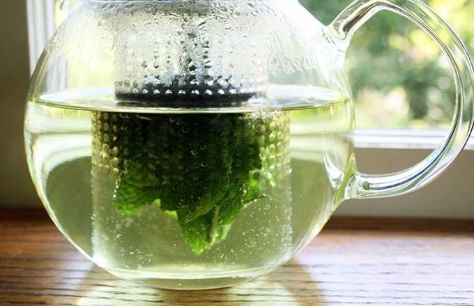 можно ли мятный чай кормящей маме