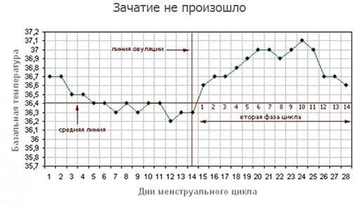 график БТ когда зачатие не произошло