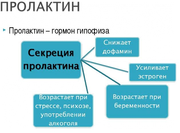 действие пролактина