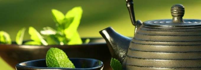 чай с мелиссой при беременности