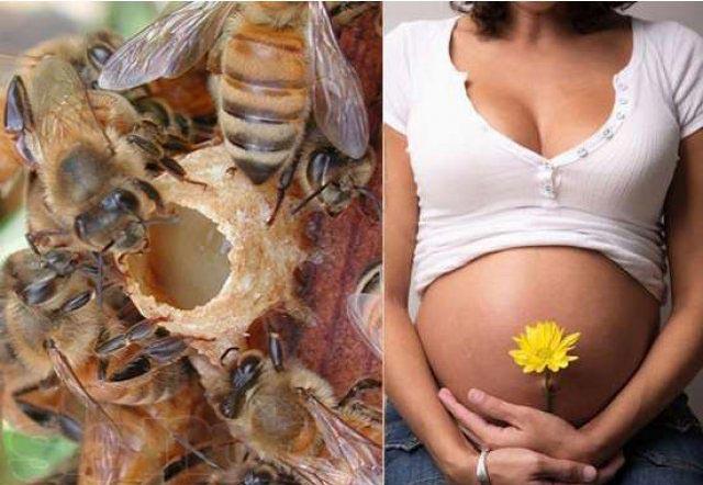 маточное молочко для зачатия