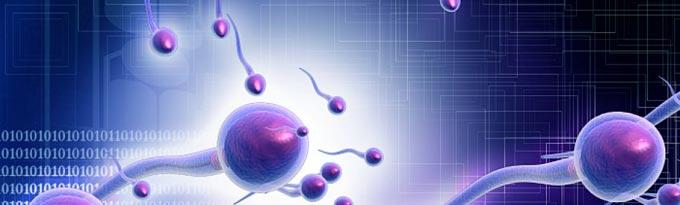 Измененные шейки головки сперматозоидов