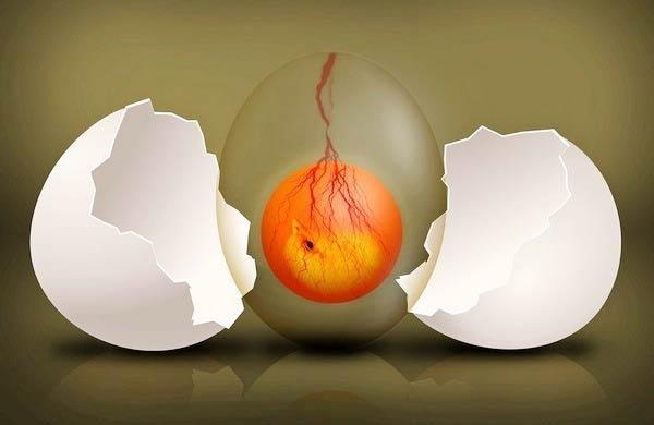 анэмбриония после эко