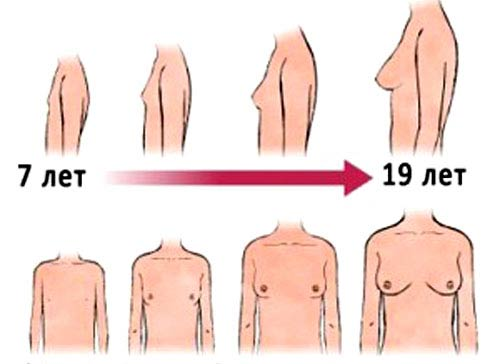 рост груди у девушки