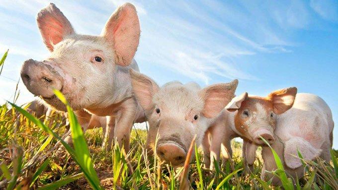 свинка в детском возрасте и бесплодие
