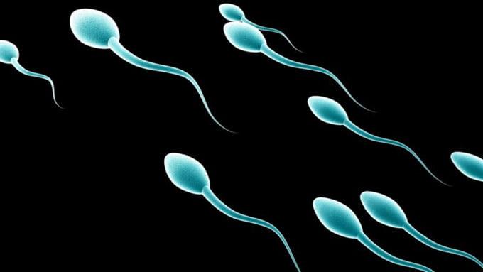 размножение сперматогенеза