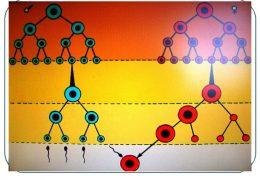 Гаметогенез — как происходит развитие половых клеток